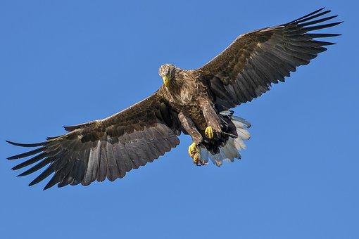 Eagle, Bird, Bird Of Prey, Expensive, Natural