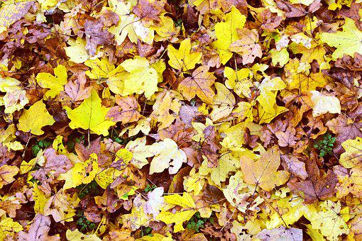 Leaves, Background, Nature, Autumn