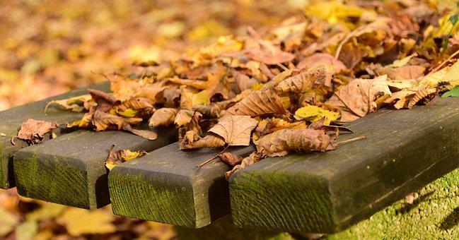 Leaves, Autumn, November, Golden Autumn