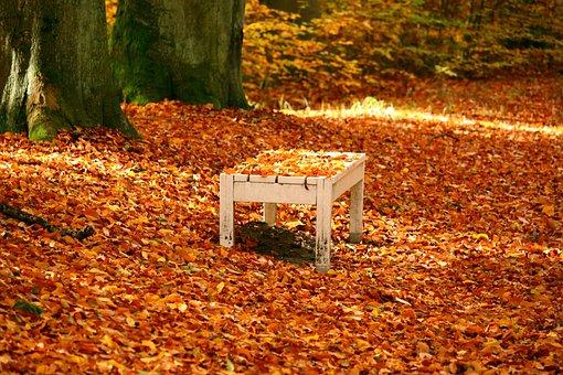 Bank, Autumn, Fall Foliage, Leaves, Golden Autumn