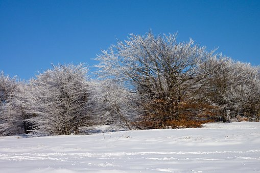Snow, Snowfall, Trees, White, Sky, Forest, Trail
