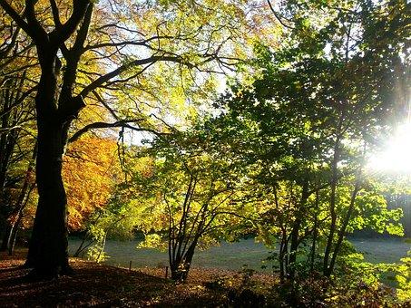Autumn, Nature, Golden Autumn, Tree