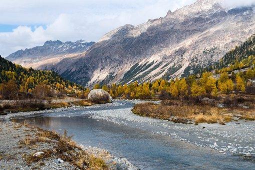 Autumn, Larch, Larch Discoloration, Fall Color