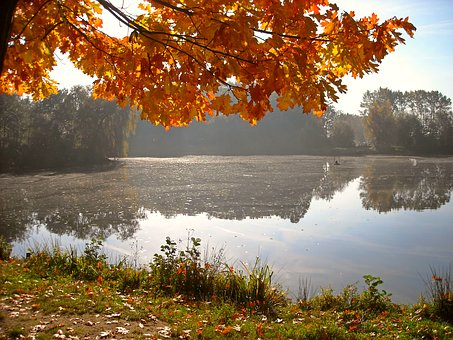 Nature, Autumn, Landscape, Pond, Water, Canopy, Golden