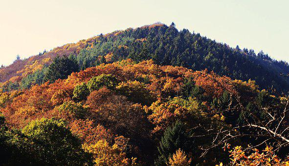 Forest, Mixed Forest, Autumn, Nature, Trees, Fall Color
