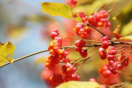 Spindle, Autumn, Light, Golden Autumn, Autumn Mood