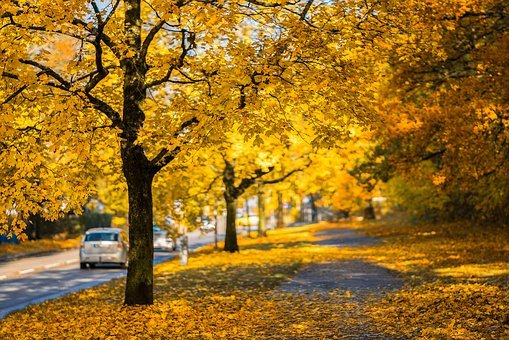 Autumn, Street, Fall, Outdoor, Yellow, Road, Trees