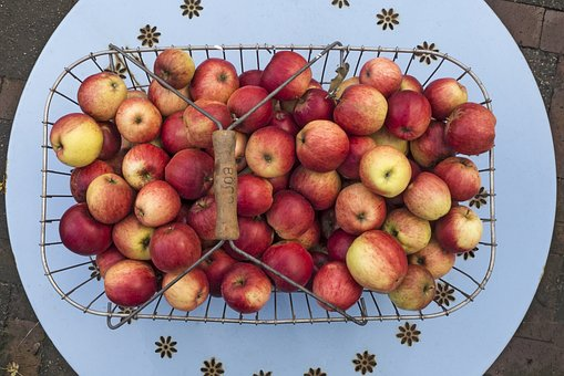 Apple, Boskoop, Pome Fruit, Summer Apple, Fruit