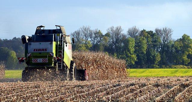 Harvest, Corn Harvest, Autumn, Harvest Time, Corn