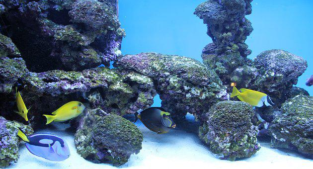 Aquarium, Fish, Deco, Nemo, Dori, Salt Water