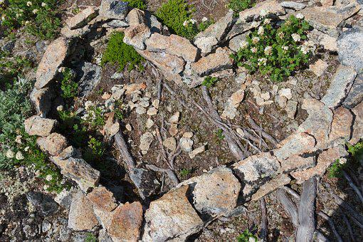 Heart, Stone, Nature, Root Vegetables, Land