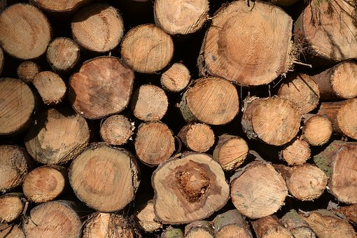 Tree Trunks, Timber, Timber Industry, Holzstapel