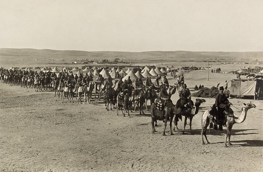Caravan, Camels, Beersheba, 1915, Black And White