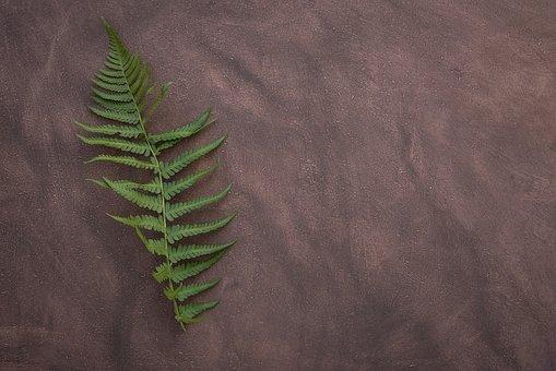 Fern, Leaf Fern, Plant, Green, Leaf, Filigree