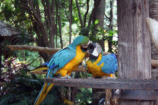 Macaw Parrots, Birds, Parrots, Macaw, Exotic, Blue