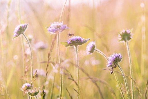 Wildflowers, Field Flowers, Summer, Flower Meadow