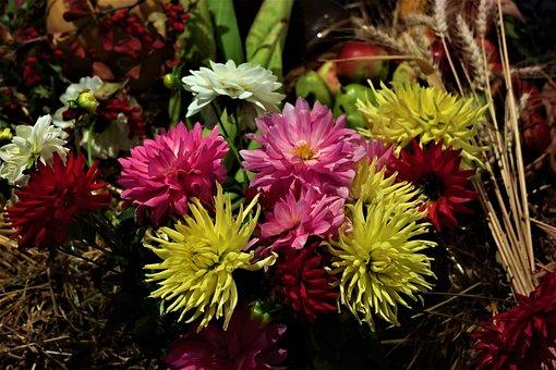 Flower, Blossom, Bloom, Thanksgiving, Autumn, Gift