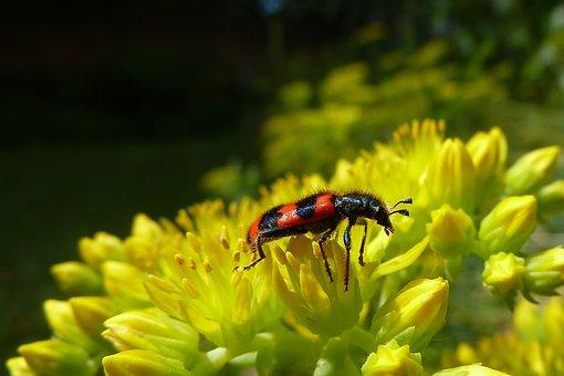 Beetle, Striped, Nature, Close, Macro