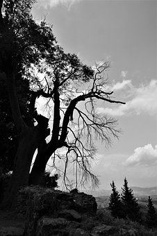 Tree, Sky, Branches, Landscape, Gnarled, Dead Plant