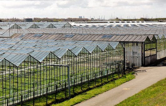 Horticulture, Agriculture, Greenhouses, Vegetables