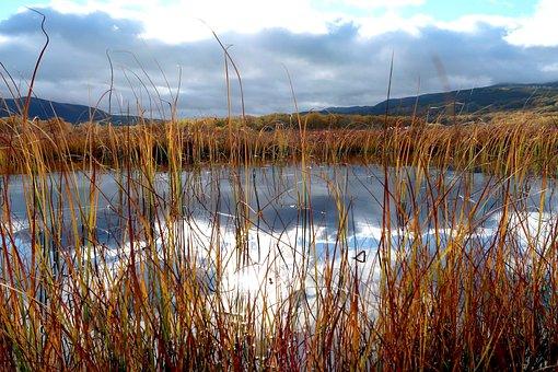 Lake, Autumn, Grass, Stalks, Clearance, Reflection
