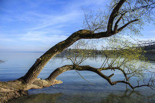 Tree In The Water, Tribe, Log, Lake, Waters, Birch