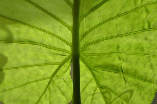 Leaf, Green, Nature, Plant, Closeup, The Freshness