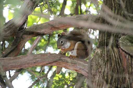 Squirrel, Wildlife, Nature, Animal, Wild, Mammal, Cute