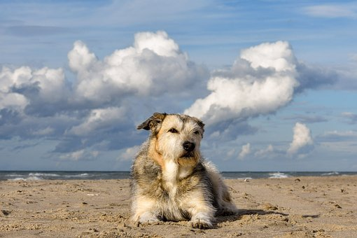 Dog, Mixed Breed Dog, Dog Snout, Animal
