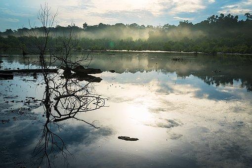 Swamp, Misty, Nature, Landscape, Bog, Morning, Light