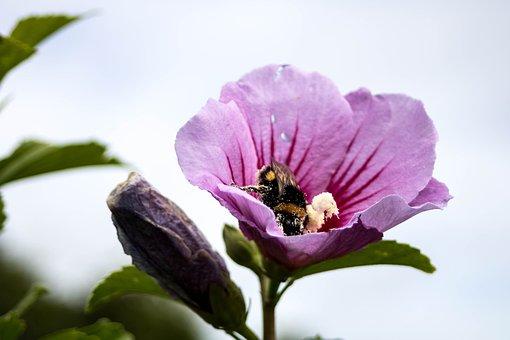 Comanche, Nature, Pollination, Azores, São Miguel