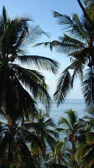 Palm Trees, Ocean, Mayotte, Exotic, Coconut