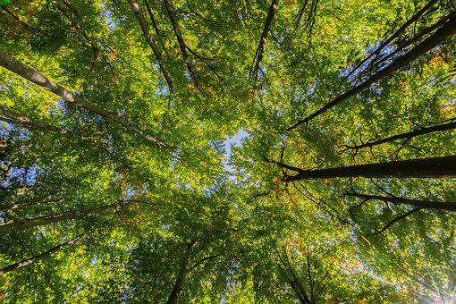 Crown, Leaves, Canopy, Forest, Perspective, Nature