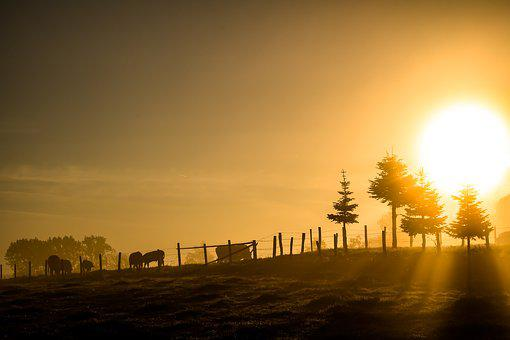 Sunrise, Morning Light, Morning, Morgenstimmung, Skies