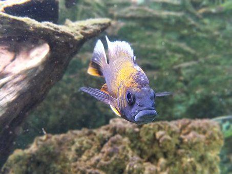Fish, Aquarium, Creature, Water