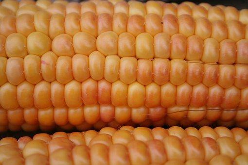 Corn On The Cob, Corn, Gold, Orange, Yellow, Nature