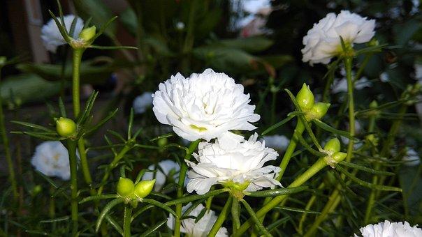 White, Flower, Kali