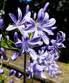 Flower Purple, Summer, Spring, Joy Of Life, Garden