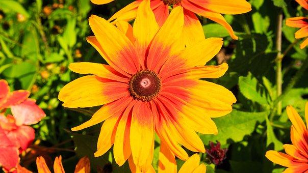 Yellow Flower, Flower, Bloom, Nature, Summer