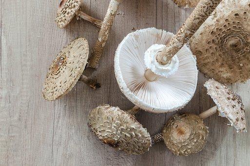 Macrolepiota Procera, Parasol, Collect, Food