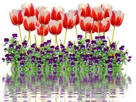 Tulips, Spring, Nature, Flower, Flowers, Red, Colorful