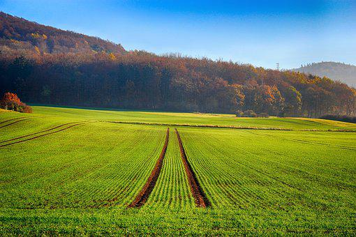 Field, Seed, Trees, Sky, Blue, Agriculture, Arable