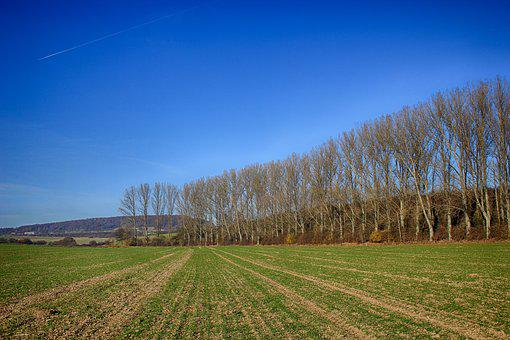 Field, Seed, Trees, Row Of Trees, Sky, Blue