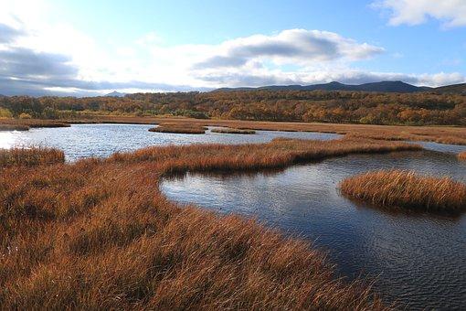 Autumn, Lake, Forest, Tundra, Swamp, Nature, Landscape