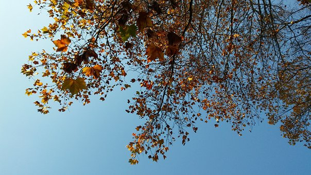Tree, Leaves, Autumn, Plant, Trees, Nature, Branch, Sky