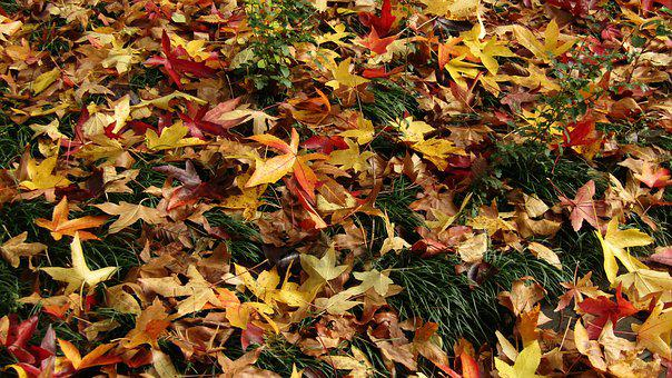 Leaves, Autumn, Colors, Nature, Park, Italy, Veneto