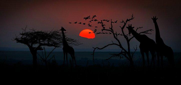 Africa, Giraffes, Animal World, Wilderness, Savannah