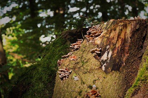 Mushrooms, Autumn, Tree Stump, Forest, Seasons