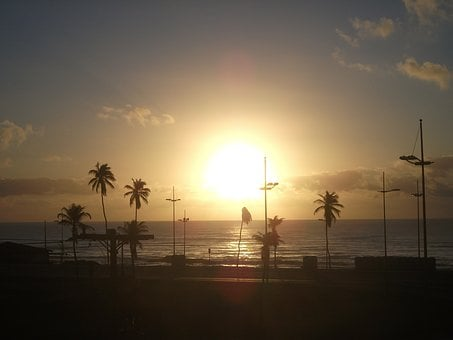 Salvador, Bahia, Beach, Sunset, Heights, Coconut Trees