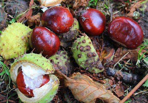 Chestnuts, Horse Chestnut, Autumn, Tree, Autumn Weather
